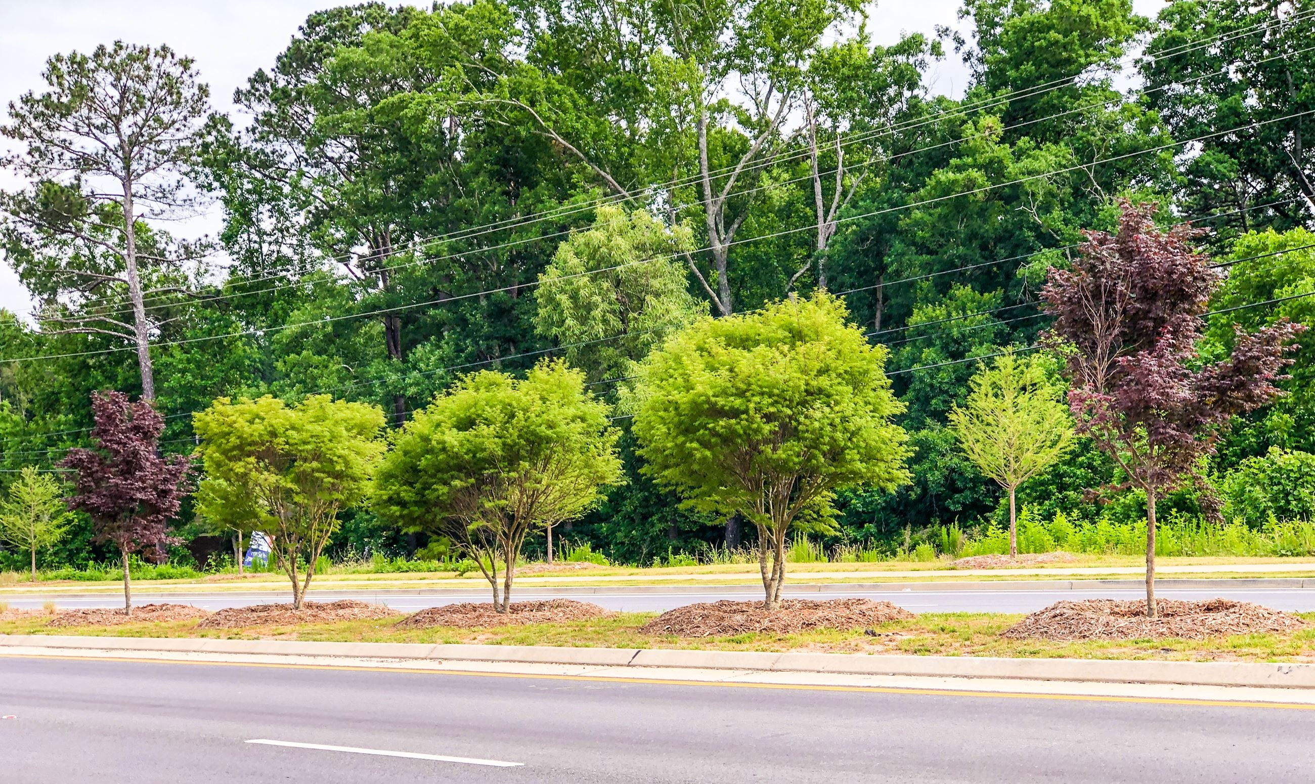 PlanFirst Success Story: Mars Hill Beautification Project